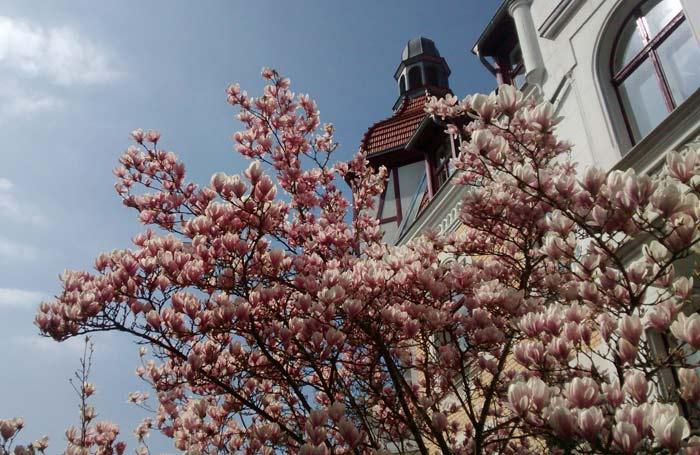 A primavera em Berlim